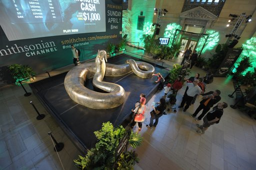 Titanoboa on display